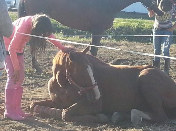 Anna and her new horse Bingo