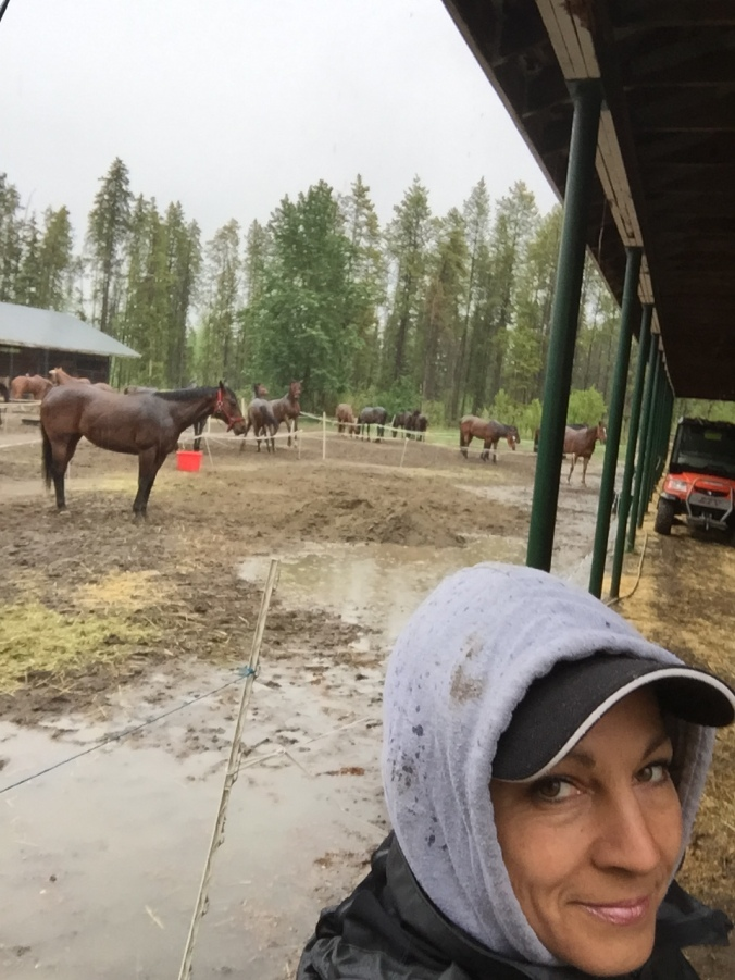 raining at the barns Grande Prairiie  May 19th 2016