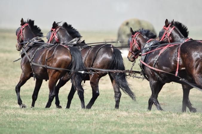 4 horse hook